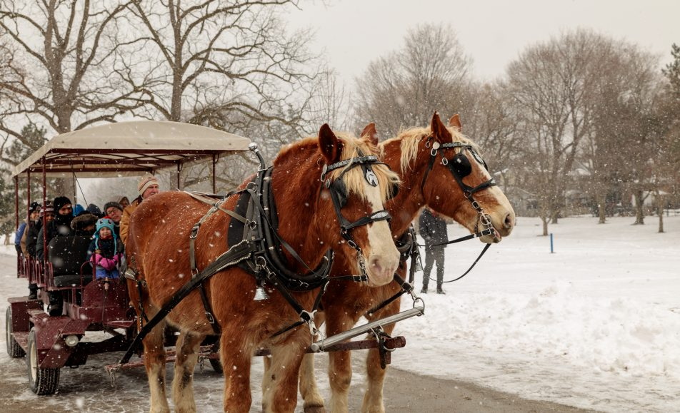 Horse and Wagon at Gage Park